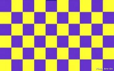 Purple & Yellow Check
