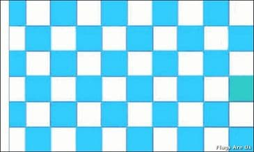 Sky Blue & White Check  (Sleeved)