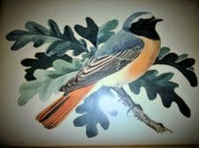 ANTIQUE FRAMED GLAZED ORIGINAL WATERCOLOUR PAINTING BIRD ON LEAFY TWIG