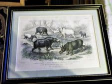 ANTIQUE FRAMED PRINT BLACKIE SON COLOUR PLATE 46 HIPPO RHINO STEWART BISHOP