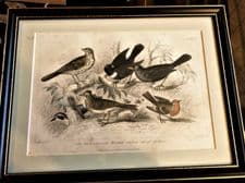 ANTIQUE FRAMED PRINT BLACKIE SON COLOUR PLATE 58 GARDEN BIRDS STEWART BISHOP
