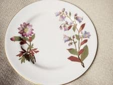"RARE ANTIQUE GILDED 7"" SIDE PLATE ROYAL WORCESTER 1889  BOTANICAL FLOWERS W1701"