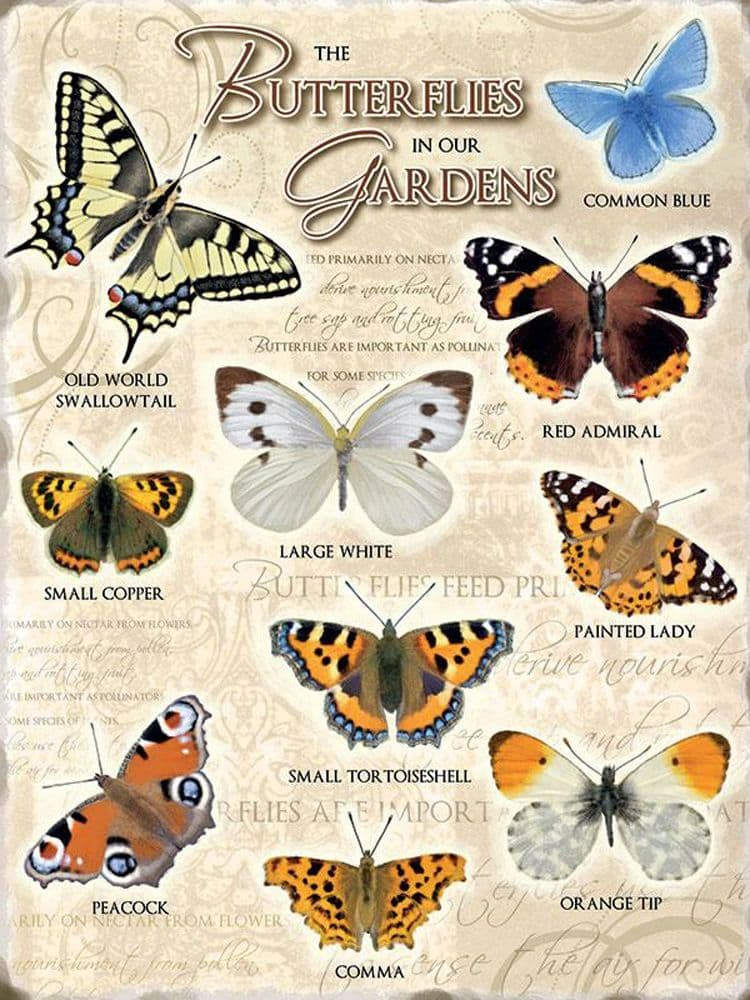 Butterflies Metal Wall Sign   Vintage Garden Sign   Nature lover's gifts