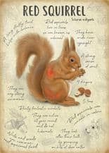 Red Squirrel Metal Wall Sign (4 sizes)